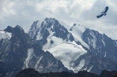 L'aigle de montagne monte au-dessus des dessus élevés Photo stock