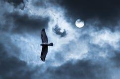 L'aigle monte dans le ciel Photo stock