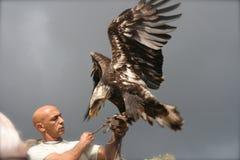 L'aigle puissant Photo libre de droits