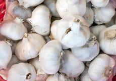 L'ail d'espèces d'allium est employé couramment pour sa saveur piquante Photo stock