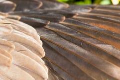 L'aile de la colombe Image stock