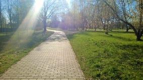 L'aire de loisirs, parcs, promenades, le soleil chaud rayonne, des arbres, ressort, lumière du soleil, beau temps Photo libre de droits