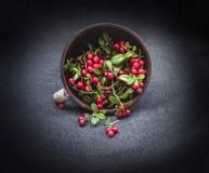 L'airelle rouge sauvage de forêt avec des feuilles a débordé autour du plat de poêlon d'argile sur le fond de coins de noir foncé Image libre de droits