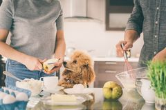 L'ajouter au chien fait le petit déjeuner Photo libre de droits