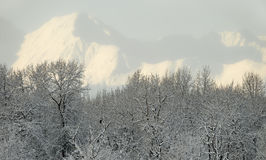 l'Alaska. Photo stock