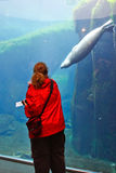 l'Alaska - amis centraux de vie marine Images stock