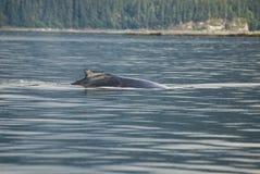 L'Alaska - baleine de bosse - détail Photo libre de droits