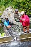 L'Alaska - la guida di pesca cattura con la rete i salmoni di Sockeye! fotografia stock