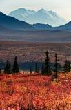 L'Alaska Mt McKinley con la tundra rossa di autunno Fotografia Stock