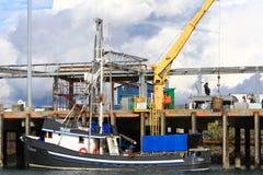 L'Alaska - Omero che scaricano halibut fotografia stock