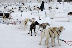 l'Alaska poursuit le traîneau Photos libres de droits