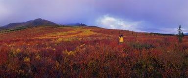 L'Alaska - sosta nazionale di Denali Fotografia Stock Libera da Diritti
