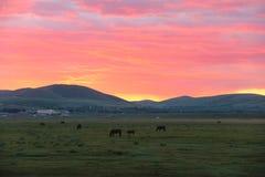L'alba della prateria Fotografia Stock