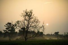 L'alba di primo mattino sopra tè gelido sistema con gli alberi sfrondati Fotografie Stock Libere da Diritti