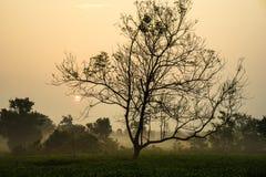 L'alba di primo mattino sopra tè gelido sistema con gli alberi sfrondati Fotografia Stock Libera da Diritti