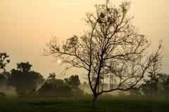 L'alba di primo mattino sopra tè gelido sistema con gli alberi sfrondati Immagini Stock