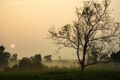 L'alba di primo mattino sopra tè gelido sistema con gli alberi sfrondati Fotografia Stock