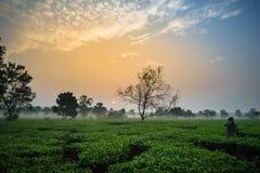 L'alba di primo mattino sopra tè gelido sistema con gli alberi sfrondati ed il fotografo che prendono la foto Immagini Stock