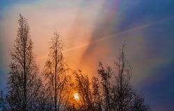 L'alba iniziale su un cielo blu scuro sui precedenti degli alberi di betulla si è scurita nel buio della mattina Immagine Stock