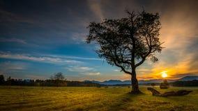 L'alba nel prato alla collina di cielo trascina, Lake Placid, New York, il Adirondacks Immagini Stock Libere da Diritti