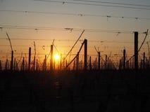 L'alba nell'inverno sulle colline delle vigne si avvicina alla polizia del lago Immagini Stock