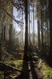 L'alba nella foresta di autunno Fotografia Stock Libera da Diritti