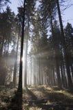 L'alba nella foresta di autunno Immagini Stock Libere da Diritti
