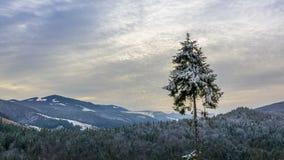 L'alba sopra le montagne boscose dell'inverno ed annebbia Lasso di tempo video d archivio