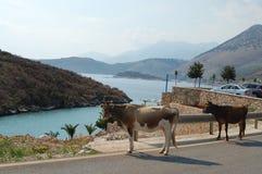 L'Albania, Oporto-Palermo Immagini Stock