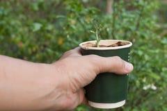 L'alberello in coffice della tazza ricicla, tenuta che il coffice ricicla con l'alberello, mondo della mano di risparmi Fotografia Stock Libera da Diritti