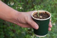 L'alberello in coffice della tazza ricicla, tenuta che il coffice ricicla con l'alberello, mondo della mano di risparmi Immagini Stock Libere da Diritti