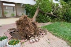 L'albero è caduto sulla costruzione Tempesta in città Fotografie Stock Libere da Diritti