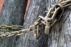 L'albero è intrecciato con una grande catena ed è chiuso fotografie stock libere da diritti