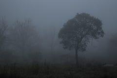 L'albero è nebbia Fotografie Stock