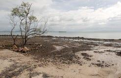 L'albero è sulla spiaggia Fotografia Stock Libera da Diritti