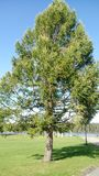 L'albero Immagine Stock