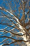 L'albero Fotografie Stock Libere da Diritti
