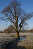 L'albero. Fotografie Stock