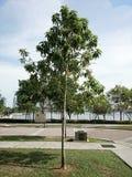L'albero Fotografia Stock Libera da Diritti