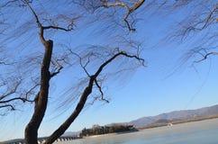 L'albero Immagini Stock