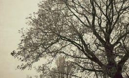 L'albero immagine stock libera da diritti