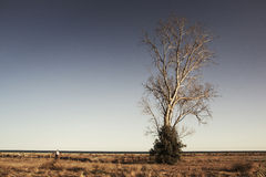 L'albero Fotografia Stock