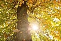 L'albero al sole Fotografia Stock