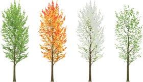 L'albero alto in molla dell'inverno di caduta dell'estate di quattro stagioni ha isolato immagine stock