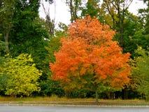 L'albero annuncia l'inizio della caduta Immagini Stock Libere da Diritti