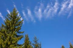 L'albero attillato con la nuvola ha allungato attraverso la cima del telaio Fotografie Stock Libere da Diritti