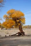 L'albero in autunno Fotografia Stock Libera da Diritti