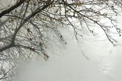 L'albero avvolto in SmokeTree ha avvolto in fumo fotografia stock