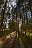 L'albero Backlit traccia di HDR Sussex ombreggia le foglie Immagini Stock