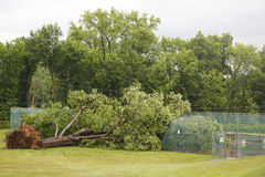 L'albero caduto ha danneggiato le linee elettriche in seguito a tempo severo ed al tornado nella contea di Ulster, New York Fotografie Stock Libere da Diritti